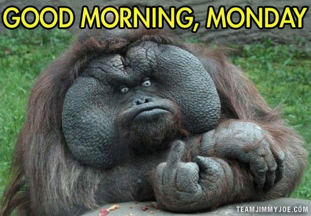 Funny Memes For The Morning : How odd: 16 funny pics memes & stuff team jimmy joe