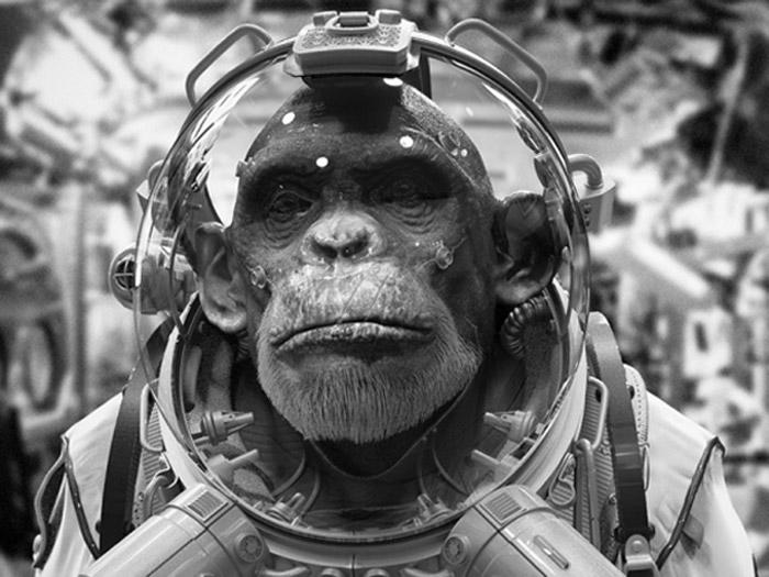 chimpanze astronaut - photo #8