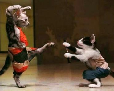 Funny Pics; Ninja Cats