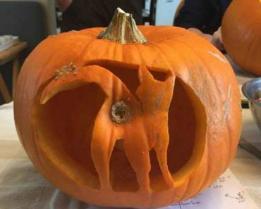 33 Funny Random Pics ~ Halloween carved pumpkin cat butt